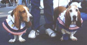 Two basset hounds stand with the jeans-clad legs of a person between them. Each of the dogs is wearing a ruffled collar with layers of blue, red-and-white stripes, and white.