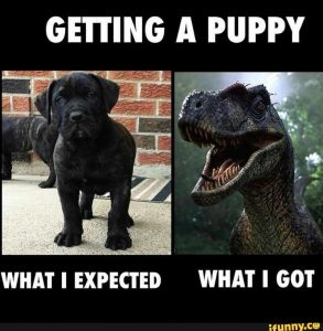 """""""Getting a puppy: What I expected"""" (picture of cute puppy); """"What I got"""" (picture of threatening dinosaur!)"""