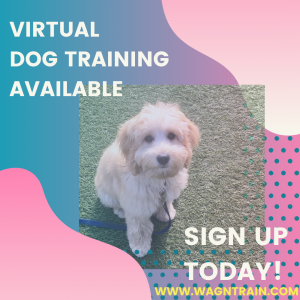 Virtual dog training available - sign up today!