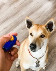 Dog looks at hand holding a clicker