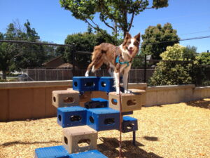 A red-and-white border collie dog balances on a climbing toy at a playground, showing off his turquoise no-pull harness